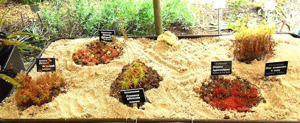 Bourse aux plantes carnivores IV 2013 - Page 2 Expo_d10