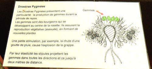 Bourse aux plantes carnivores IV 2013 - Page 2 Expo_d11