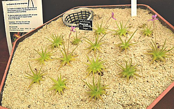 Bourse aux plantes carnivores IV 2013 - Page 2 Expo_p10