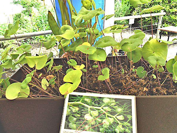 Bourse aux plantes carnivores IV 2013 - Page 2 Expo_u10