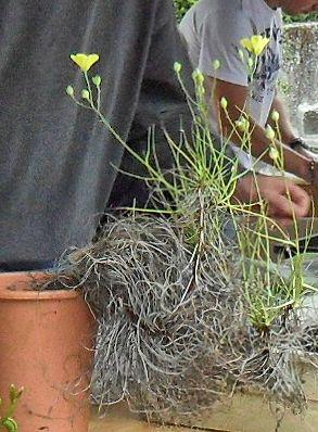 Bourse aux plantes carnivores IV 2013 - Page 2 Plante12