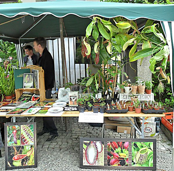 Bourse aux plantes carnivores IV 2013 - Page 2 Swiss_11