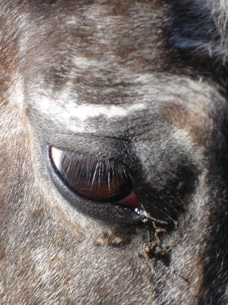 CONCOURS PHOTOS, L'oeil des chevaux ! Dsc03610