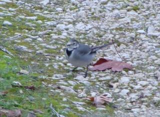 Les oiseaux du jardin (28 espèces d'oiseaux observées pour vous) Dsc02110