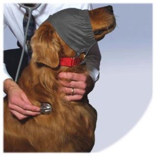 I cani riconoscono il volto del padrone anche in foto Calmin10