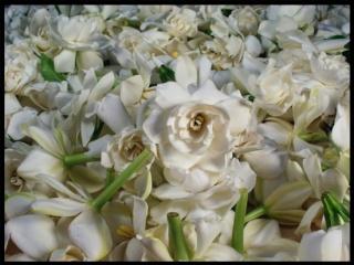 GARDENIA ENFLEURAGE (Spring 2012) Garden12