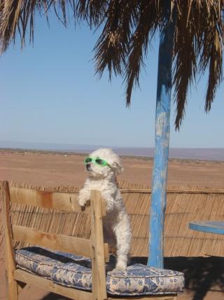 Camping La Boussole du Sahara à MHAMID 204_a10
