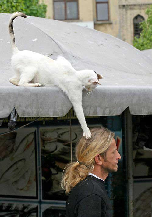 HUMOUR : le chat dans tous ses états - Page 2 0_chat10