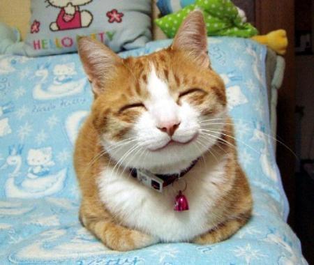 HUMOUR : le chat dans tous ses états - Page 2 0_chat12