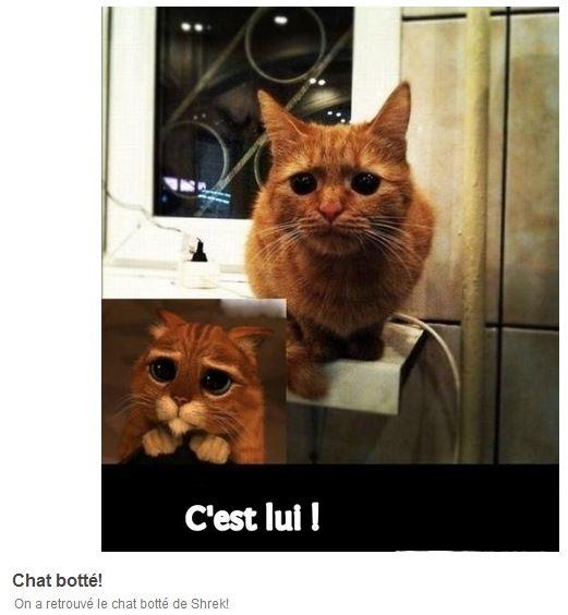 HUMOUR : le chat dans tous ses états - Page 3 0_chat15