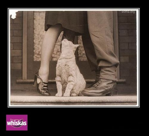 HUMOUR : le chat dans tous ses états - Page 3 0_chat16