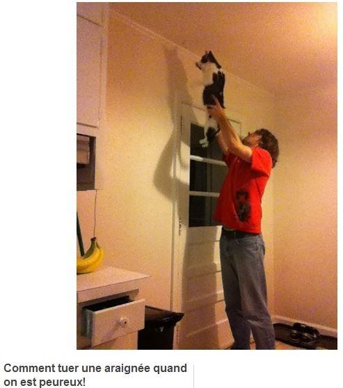 HUMOUR : le chat dans tous ses états - Page 3 0_chat18