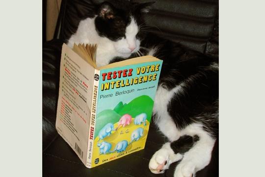 HUMOUR : le chat dans tous ses états - Page 5 0_chat27