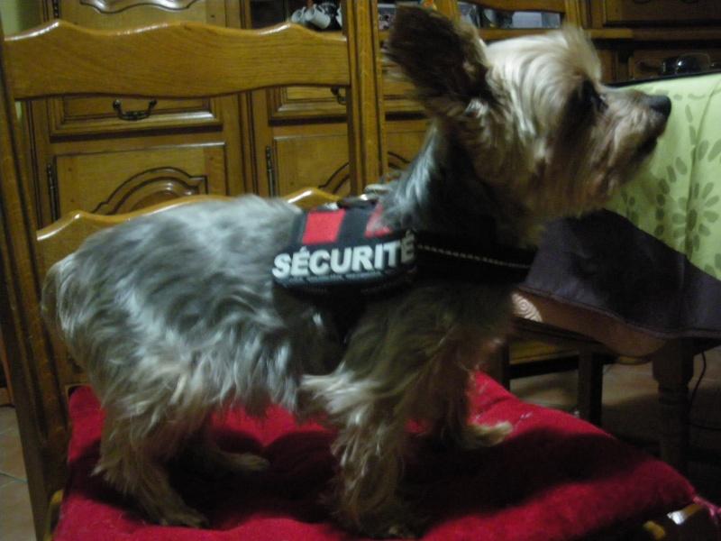 Vos chiens et leurs harnais! Photo  - Page 3 Nougat11