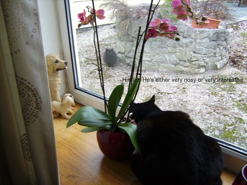 Poppys New Admirer 00510