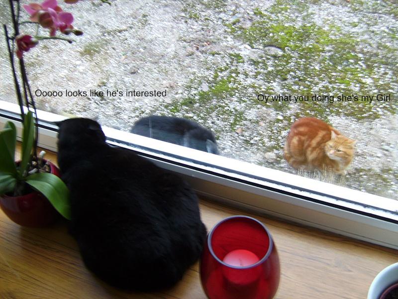 Poppys New Admirer 00610