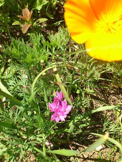 fleur inconnu Dsc_0033
