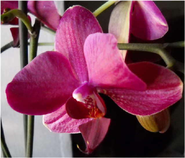 Passione per la fotografia: le nostre foto. - Pagina 3 Orchid10