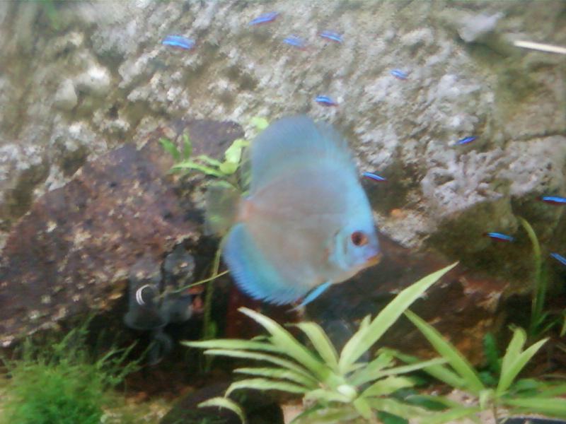 aquariums draco53 - Page 3 Photo-15