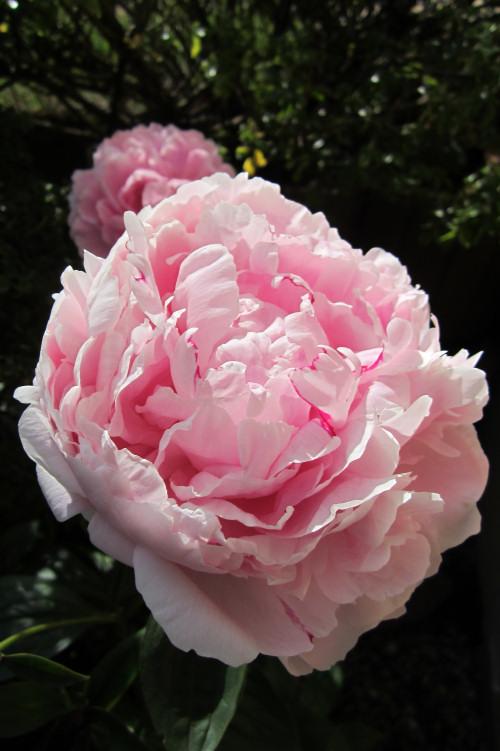 32 - La couleur rose !!! - Page 4 Img_2410