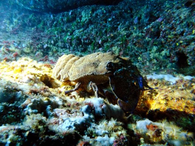 Menorca trip June 2013 Dscf2212