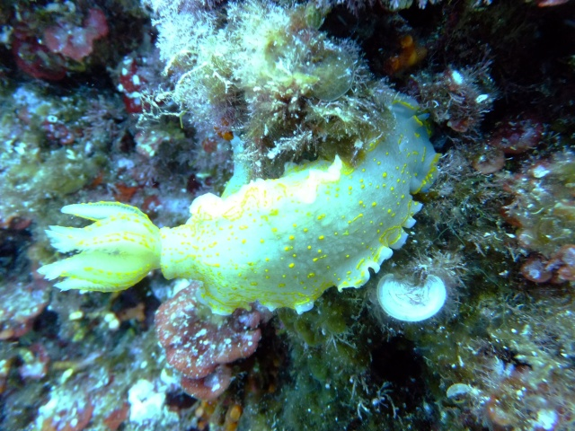 Menorca trip June 2013 Dscf2310