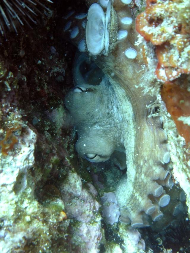 Menorca trip June 2013 Dscf2311