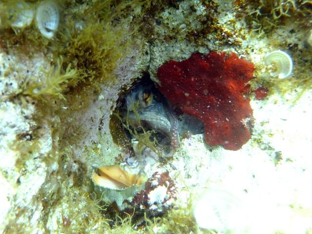 Menorca trip June 2013 Dscf2312
