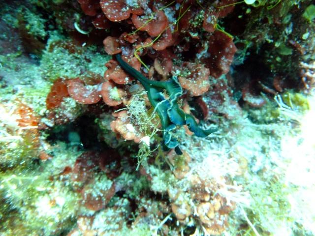 Menorca trip June 2013 Dscf2315