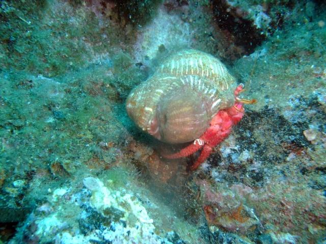 Menorca trip June 2013 Dscf2913