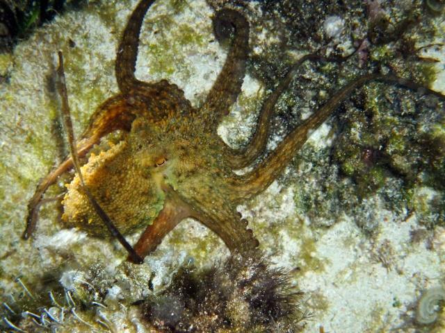 Menorca trip June 2013 Dscf3010