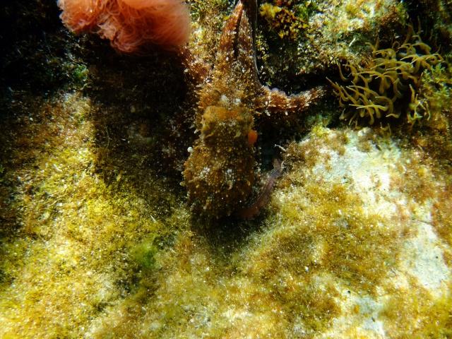 Menorca trip June 2013 Dscf3015