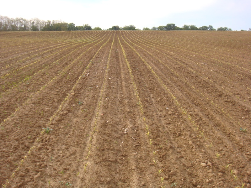 semis de maïs 2013  - Page 10 Dsc00448