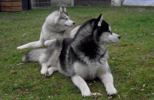 La maison de mes loups !!!! Moumou10