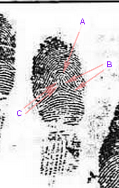 X - WALT DISNEY - One of his fingerprints shows an unusual characteristic! - Page 2 Discre10