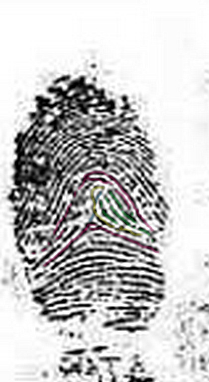 X - WALT DISNEY - One of his fingerprints shows an unusual characteristic! Left_i13