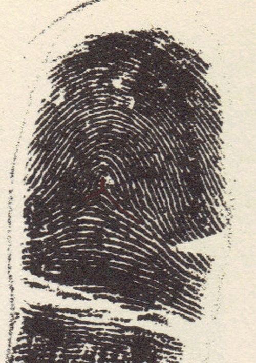X - WALT DISNEY - One of his fingerprints shows an unusual characteristic! Tented10