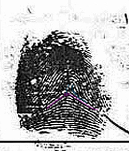 X - WALT DISNEY - One of his fingerprints shows an unusual characteristic! Walt-d10