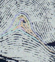 X - WALT DISNEY - One of his fingerprints shows an unusual characteristic! - Page 2 Walt_d16