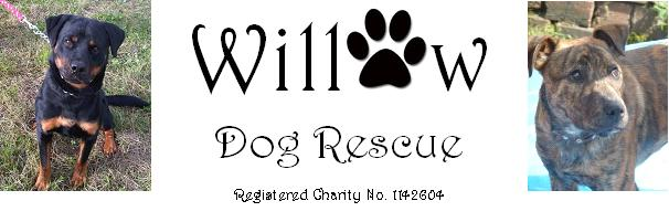 Hello Willow Dog Rescue Banner11