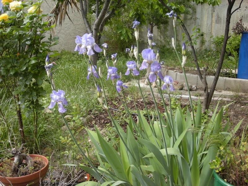Quelques petites floraisons Dscn5720
