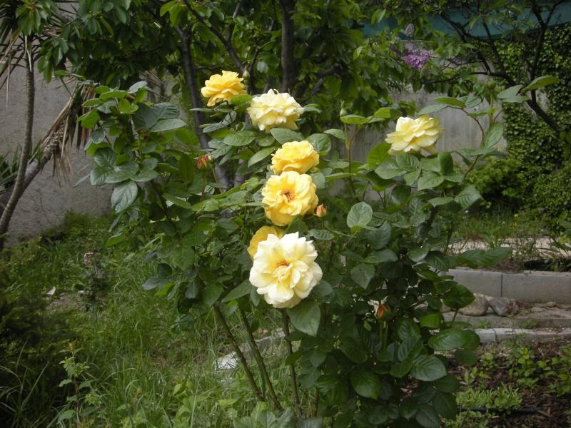 Quelques petites floraisons Dscn5721
