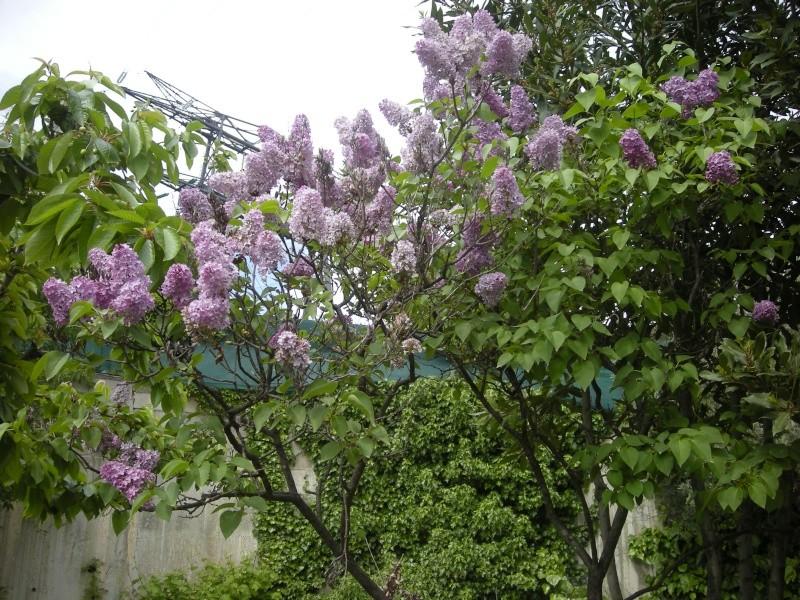 Quelques petites floraisons Dscn5722