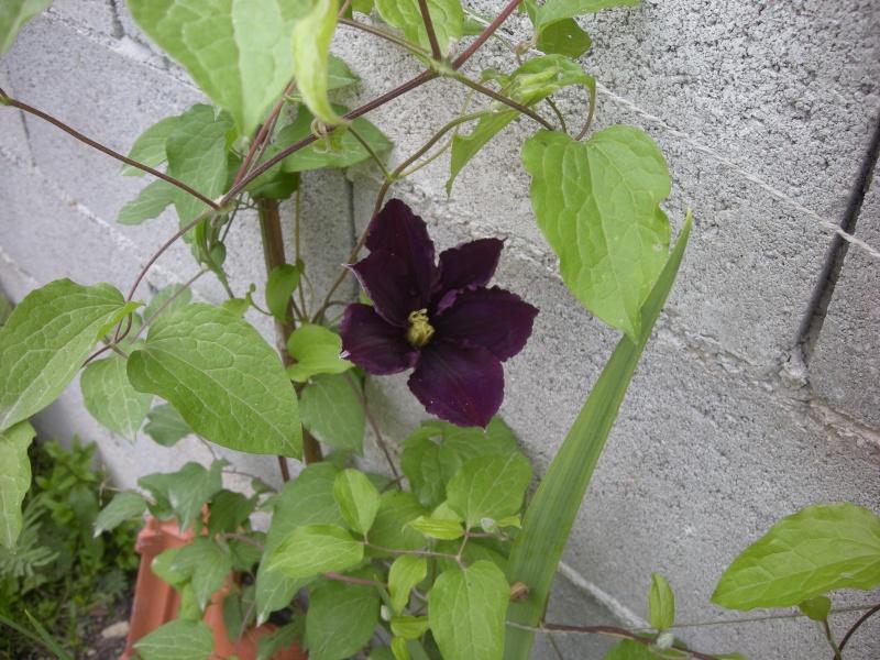 Quelques petites floraisons Dscn5723