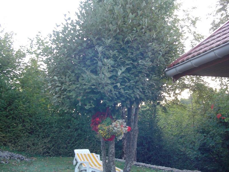 Apprendre à reconnaitre les arbres qui nous entourent Dsc00917
