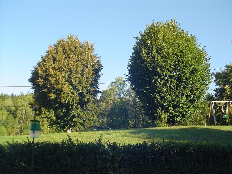 Apprendre à reconnaitre les arbres qui nous entourent - Page 2 Dsc00919