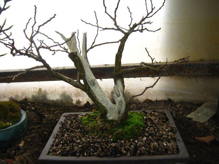 Acacia , brutta bestia . Acacia10