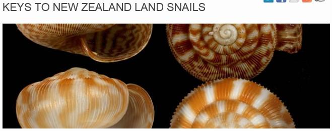 Terrestres de Nouvelle-Zélande 2013-013