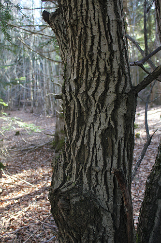 Forêts montagnardes du Massif Central 86653510
