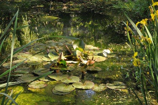 le coin préféré de mon jardin : autour de la mare Jardin11